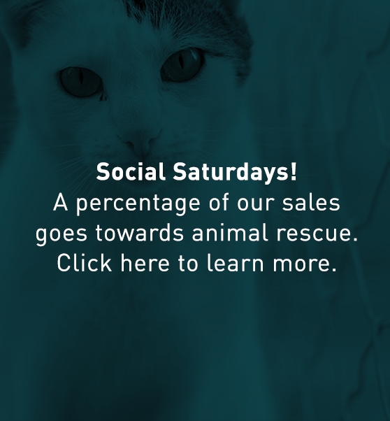 Social Saturdays! A percentage of our sales will go towards animal rescue. Click here to learn more. gallery icon, cat staring at camera