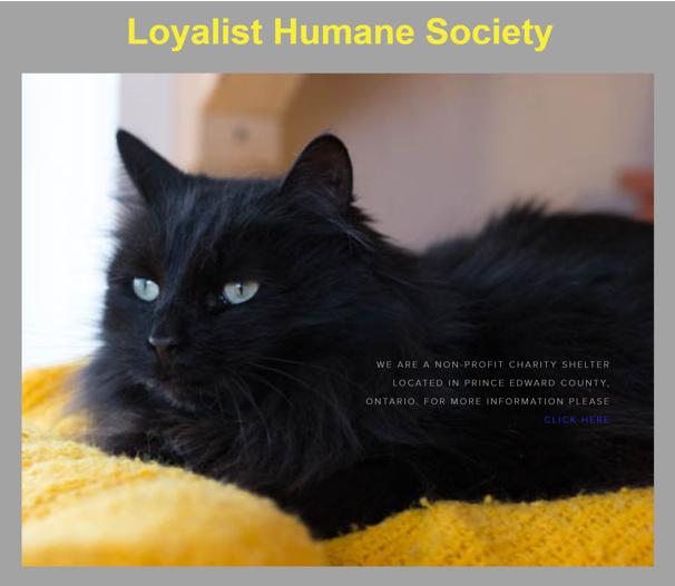 Loyalist Humane Society, cat lying down on yellow pillow